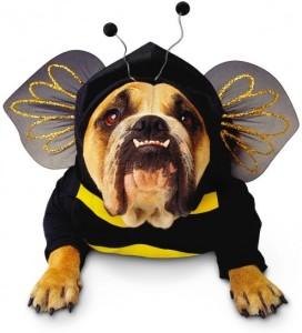 cane-con-costume-da-ape