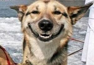 cane_sorriso