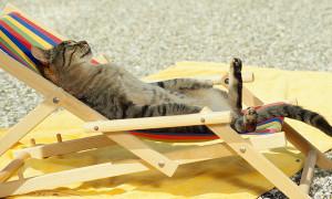 gatto-estateS